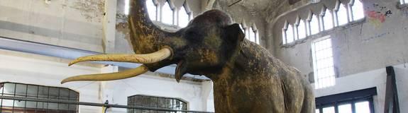 braunsbedra mammut